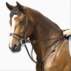Zadeluitrusting - Accessoires Zadel - kopen - Borstriem paard SCHOOLING zwart – maat paard