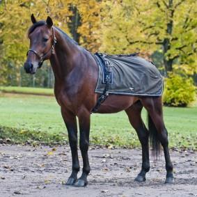Paardendekens - Uitrijdekens - Nierdekens - kopen - Endura quarter sheet, w/ fleece lining